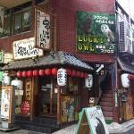 フクロウカフェに行ってきた|大阪難波「LUKCY OWL」
